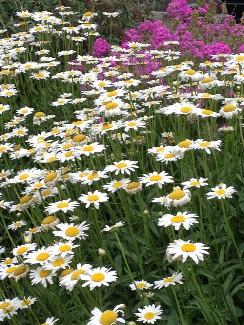 Summer Perennials